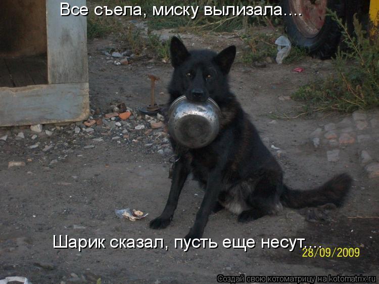 Котоматрица: Все съела, миску вылизала…...  Шарик сказал, пусть еще несут…...