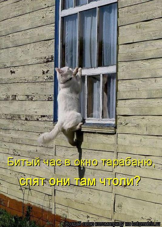 Котоматрица: Битый час в окно тарабаню,  спят они там чтоли?
