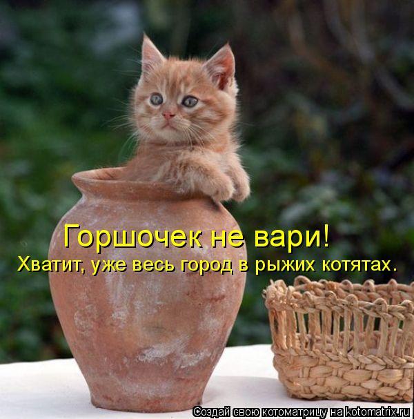 Котоматрица: Горшочек не вари!  Хватит, уже весь город в рыжих котятах.