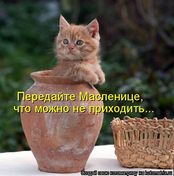 Котоматрица: Передайте Масленице,  что можно не приходить...