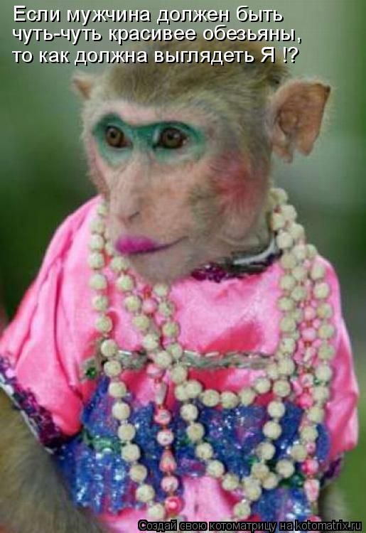 Котоматрица: Если мужчина должен быть чуть-чуть красивее обезьяны, то как должна выглядеть Я !?