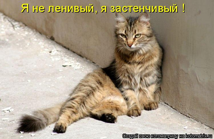 Котоматрица: Я не ленивый, я застенчивый !