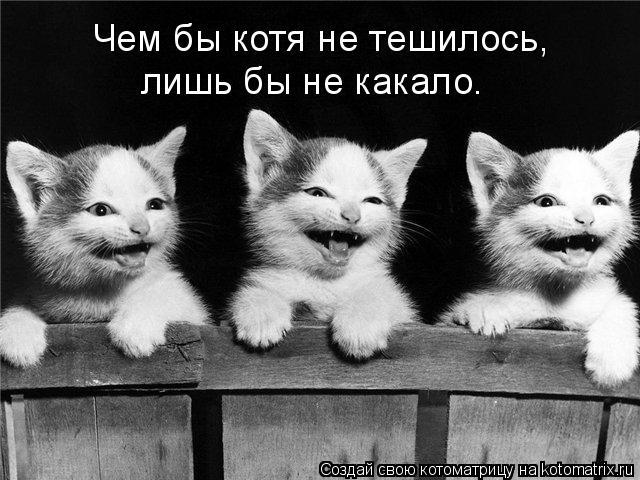Котоматрица: Чем бы котя не тешилось, лишь бы не какало.