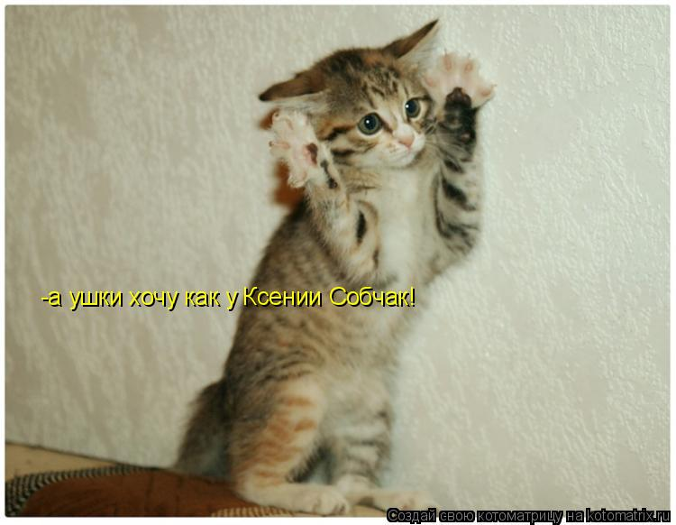 Котоматрица: -а ушки хочу как у Ксении Собчак!