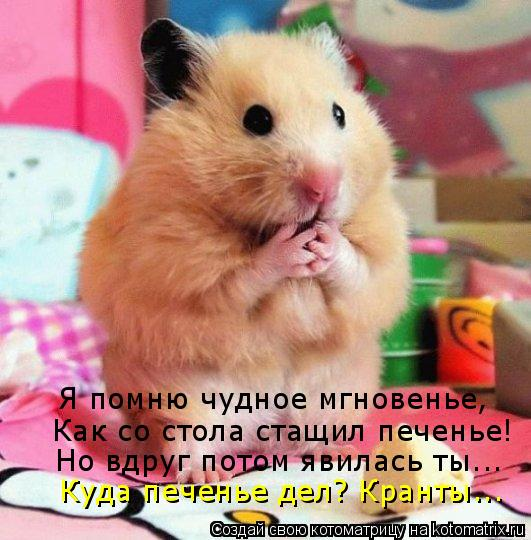 Котоматрица: Я помню чудное мгновенье, Как со стола стащил печенье! Но вдруг потом явилась ты... Куда печенье дел? Кранты...