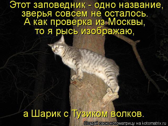 Котоматрица: Этот заповедник - одно название,  зверья совсем не осталось.  А как проверка из Москвы,  то я рысь изображаю,  а Шарик с Тузиком волков.