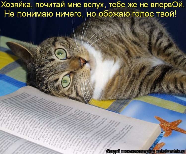 Котоматрица: Хозяйка, почитай мне вслух, тебе же не впервОй.  Не понимаю ничего, но обожаю голос твой!