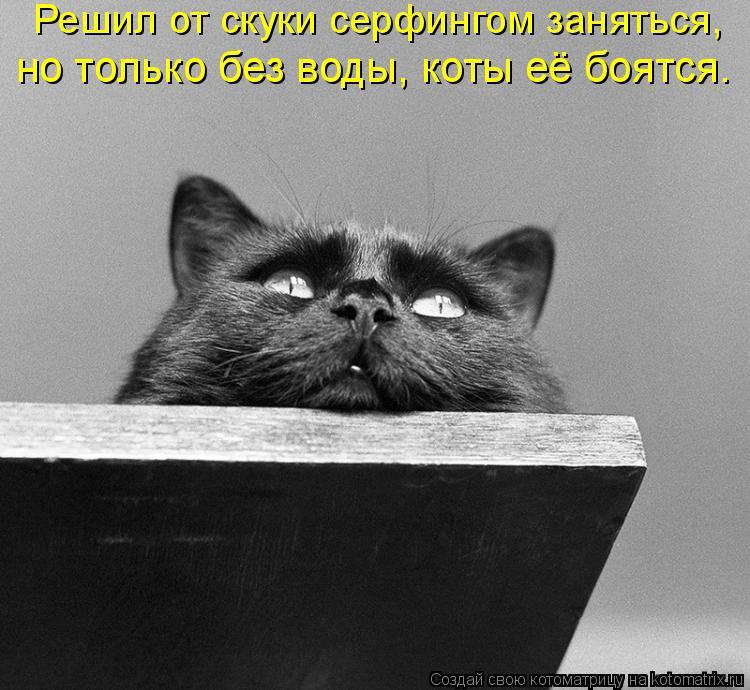 Котоматрица: Решил от скуки серфингом заняться,  но только без воды, коты её боятся.
