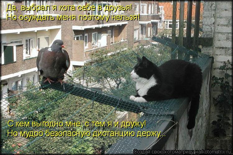 Котоматрица: Да, выбрал я кота себе в друзья! Но осуждать меня поэтому нельзя! С кем выгодно мне, с тем я и дружу! Но мудро безопасную дистанцию держу...