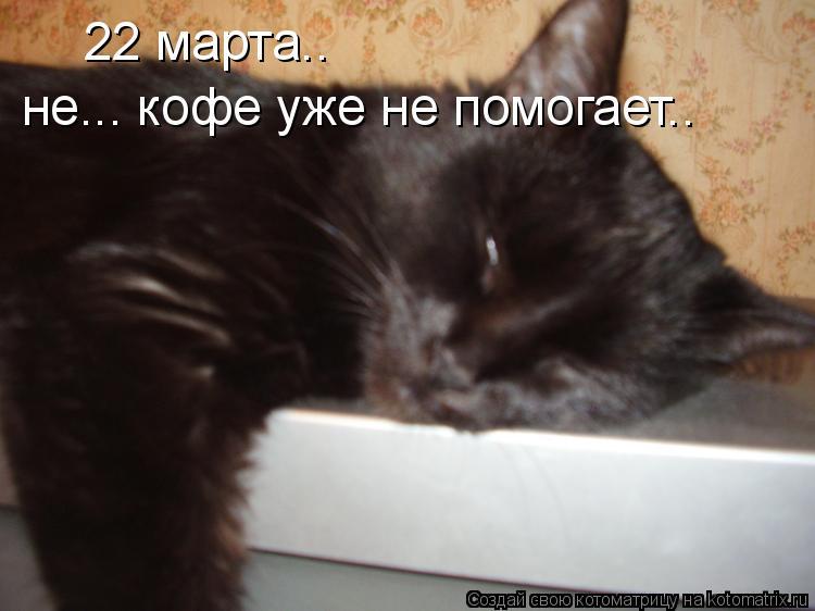 Котоматрица: не... кофе уже не помогает.. 22 марта..