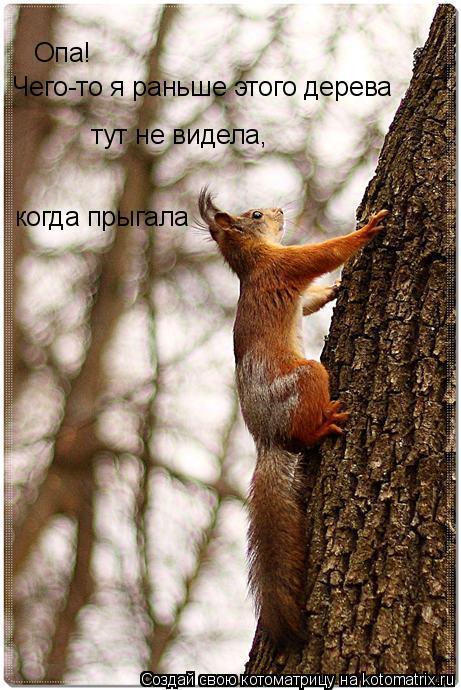 Котоматрица: Опа! Чего-то я раньше этого дерева тут не видела, когда прыгала