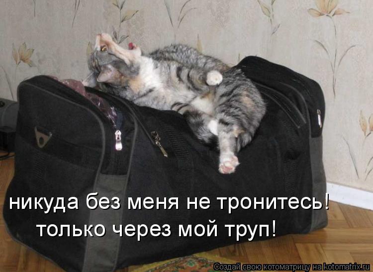 Котоматрица: никуда без меня не тронитесь! только через мой труп!