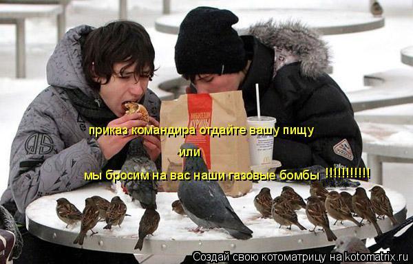 Котоматрица: приказ командира отдайте вашу пищу   мы бросим на вас наши газовые бомбы    или   !!!!!!!!!!!