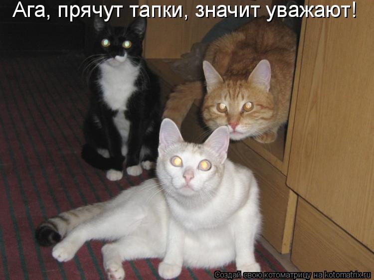 Котоматрица: Ага, прячут тапки, значит уважают!