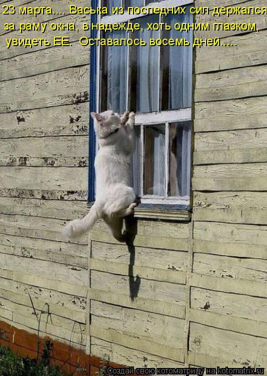 Котоматрица: 23 марта…... Васька из последних сил держался  за раму окна, в надежде, хоть одним глазком,   увидеть ЕЕ.  Оставалось восемь дней…....