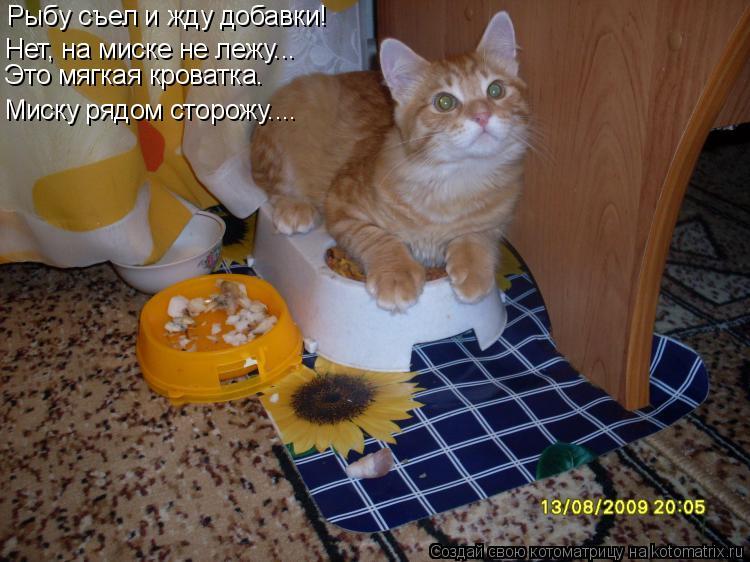 Котоматрица: Рыбу съел и жду добавки!  Нет, на миске не лежу….. Миску рядом сторожу.... Это мягкая кроватка.
