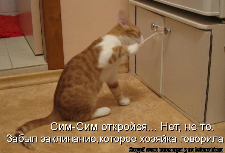 Котоматрица: Сим-Сим откройся... Нет, не то. Забыл заклинание,которое хозяйка говорила.