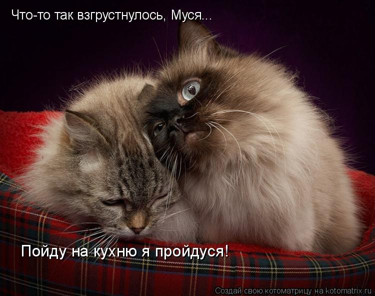 Котоматрица: Что-то так взгрустнулось, Муся... Пойду на кухню я пройдуся!