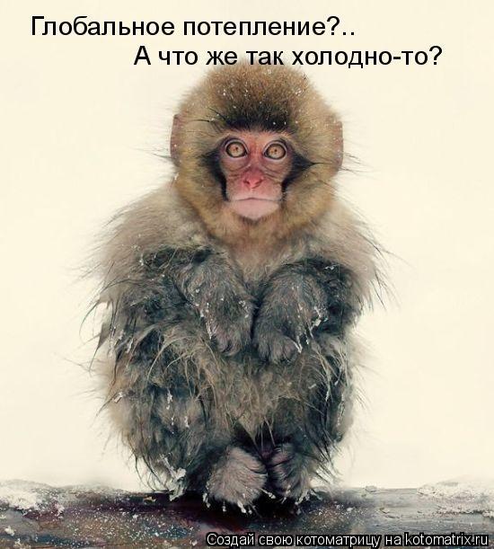 Котоматрица: Глобальное потепление?.. А что же так холодно-то?