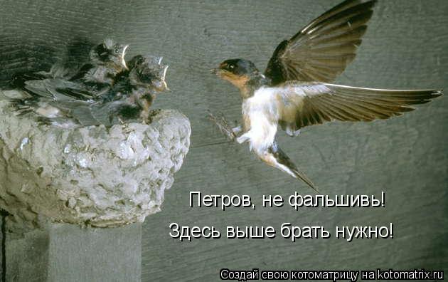 Котоматрица: Петров, не фальшивь! Здесь выше брать нужно!