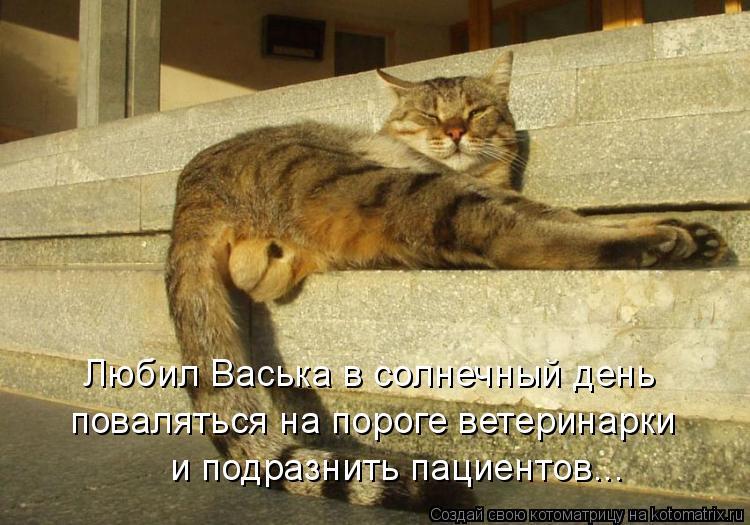 Любил Васька в солнечный день поваляться на пороге ветеринарки и подразнить пациентов...