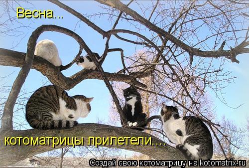 Котоматрица: Весна... котоматрицы прилетели....