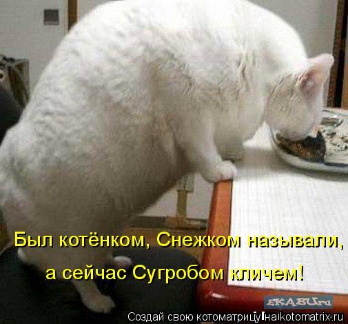 Котоматрица: Был котёнком, Снежком называли, а сейчас Сугробом кличем!