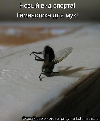 Котоматрица: Новый вид спорта! Гимнастика для мух!