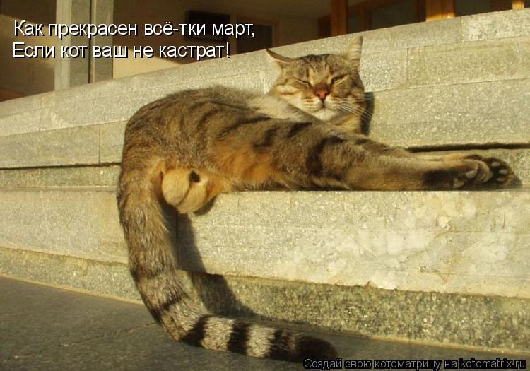 Котоматрица: Как прекрасен всё-тки март, Если кот ваш не кастрат!