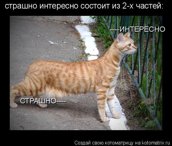 http://kotomatrix.ru/images/lolz/2010/03/23/523839.jpg