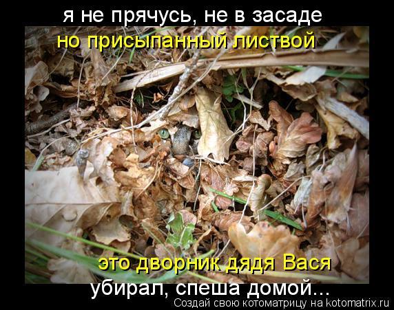 Котоматрица: я не прячусь, не в засаде но присыпанный листвой это дворник дядя Вася убирал, спеша домой...