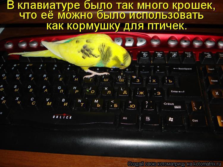 Котоматрица: В клавиатуре было так много крошек,  что её можно было использовать  как кормушку для птичек.