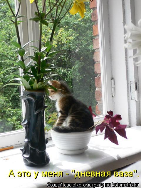 """Котоматрица: А это у меня - """"дневная ваза""""."""