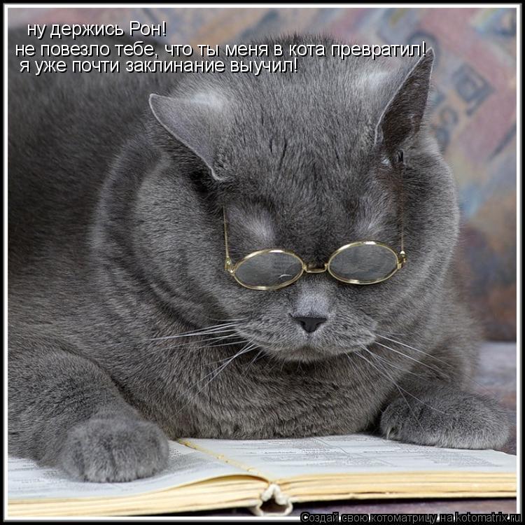 Котоматрица: ну держись Рон! не повезло тебе, что ты меня в кота превратил! я уже почти заклинание выучил!
