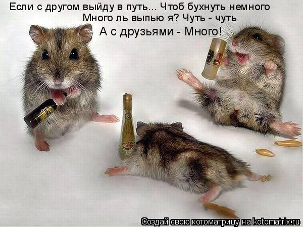Котоматрица: А с друзьями - Много! Много ль выпью я? Чуть - чуть Если с другом выйду в путь... Чтоб бухнуть немного