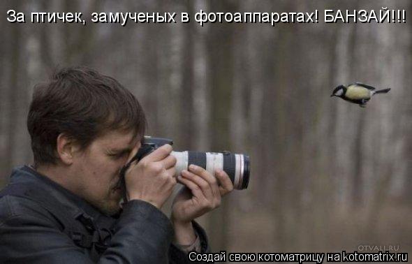 За птичек, замученых в фотоаппаратах! БАНЗАЙ!!!