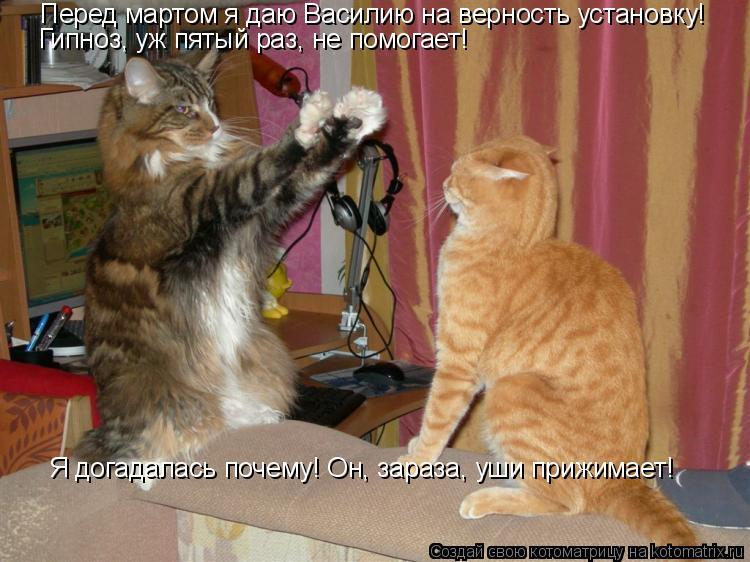 Котоматрица: Перед мартом я даю Василию на верность установку! Гипноз, уж пятый раз, не помогает! Я догадалась почему! Он, зараза, уши прижимает!