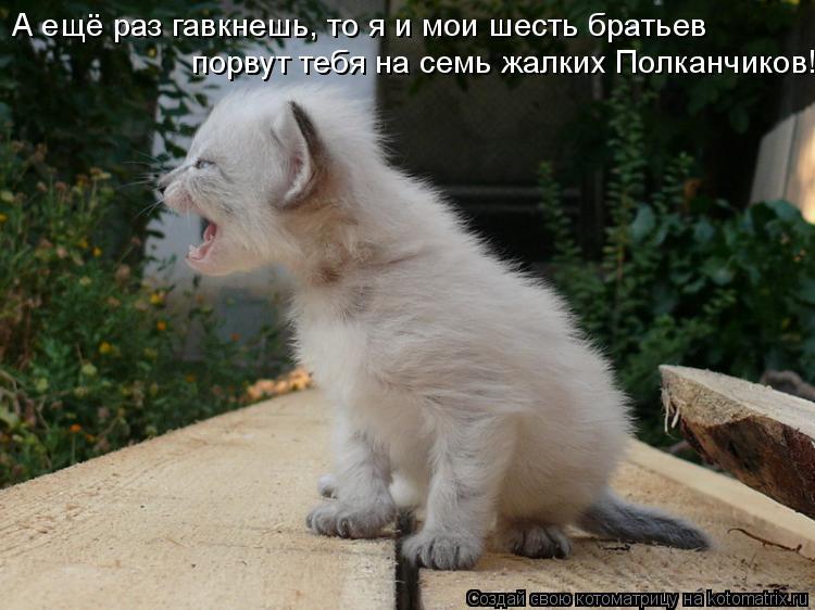 Котоматрица: А ещё раз гавкнешь, то я и мои шесть братьев порвут тебя на семь жалких Полканчиков!