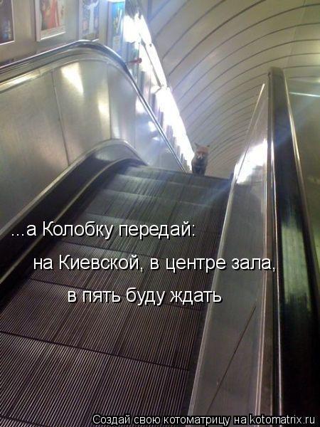 Котоматрица: ...а Колобку передай: на Киевской, в центре зала,  в пять буду ждать