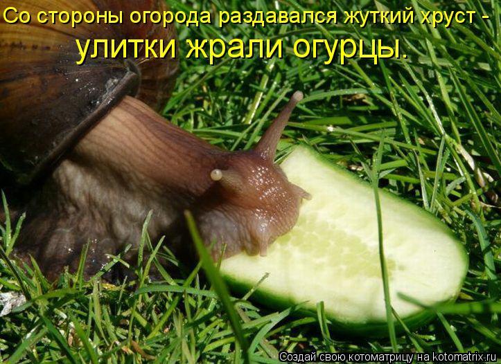 Котоматрица: Со стороны огорода раздавался жуткий хруст -  улитки жрали огурцы.