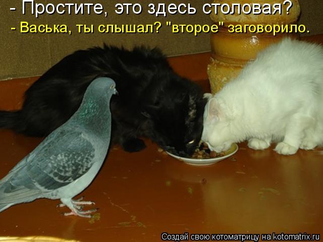"""Котоматрица: - Простите, это здесь столовая?  - Васька, ты слышал? """"второе"""" заговорило."""