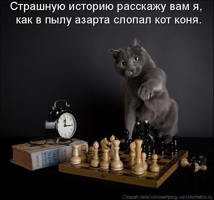 Котоматрица: Страшную историю расскажу вам я,  как в пылу азарта слопал кот коня.