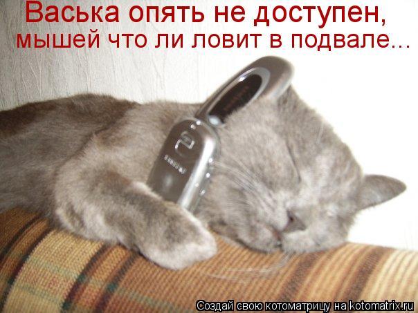 Котоматрица: Васька опять не доступен,  мышей что ли ловит в подвале...