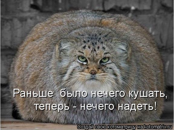 Котоматрица: Раньше  было нечего кушать, теперь - нечего надеть!