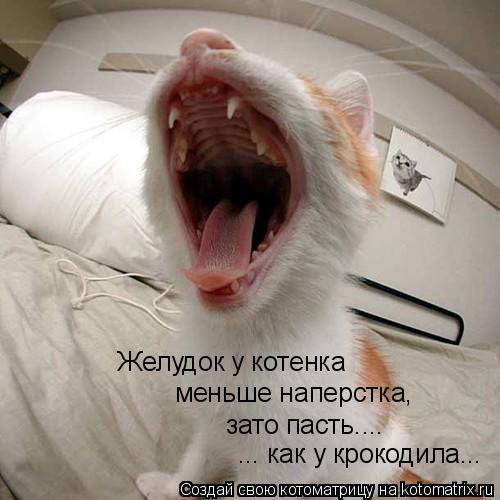 Котоматрица: Желудок у котенка  меньше наперстка,  зато пасть.... ... как у крокодила...