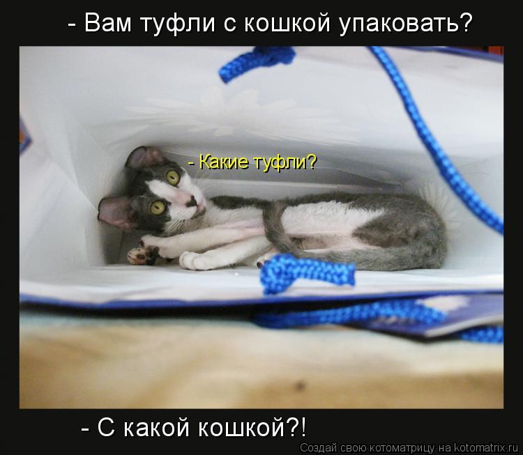 Котоматрица: - Вам туфли с кошкой упаковать? - Какие туфли? - С какой кошкой?!