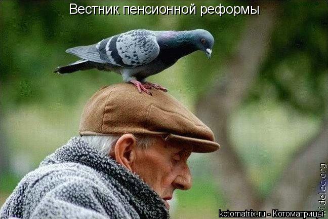 Котоматрица: Вестник пенсионной реформы