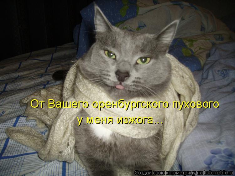 Котоматрица: От Вашего оренбургского пухового у меня изжога...
