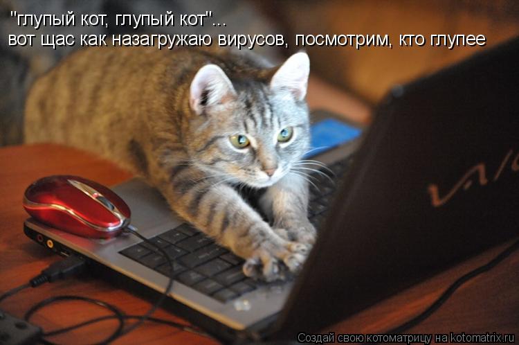 """Котоматрица: """"глупый кот, глупый кот""""... вот щас как назагружаю вирусов, посмотрим, кто глупее"""