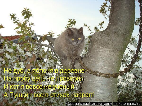 Котоматрица: Не дуб, а яблоня в деревне На пробу цепь не проверял И кот я вовсе не ученый А Пушкин все в стихах наврал!